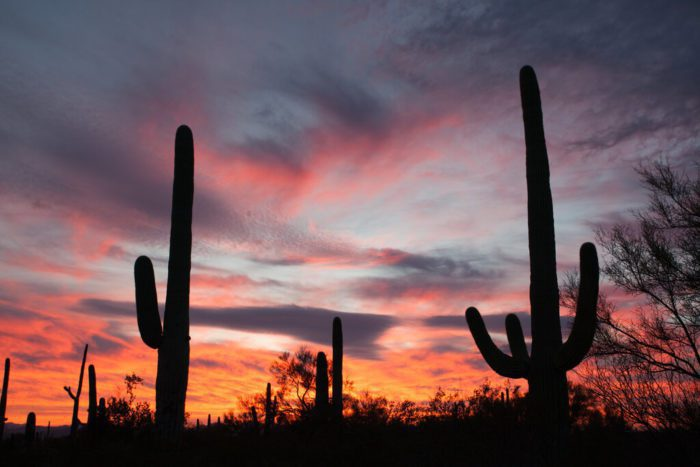 cacti sonoran desert scottsdale az